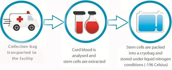 shaklee-cord-blood-cell-banking-delivery-process