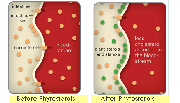 cholesterol-phytocol-works