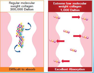 shaklee-collagen-weight