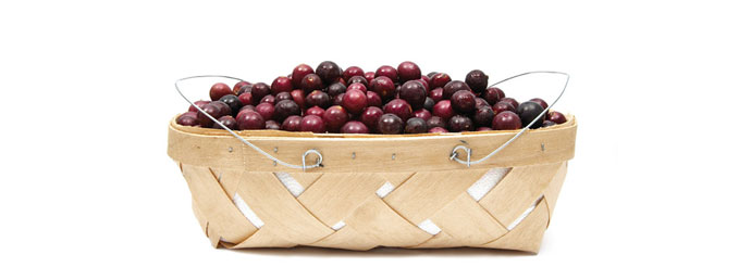 3 Amazing Health Benefits of Muscadine Grape – Nature's Rarest Grape